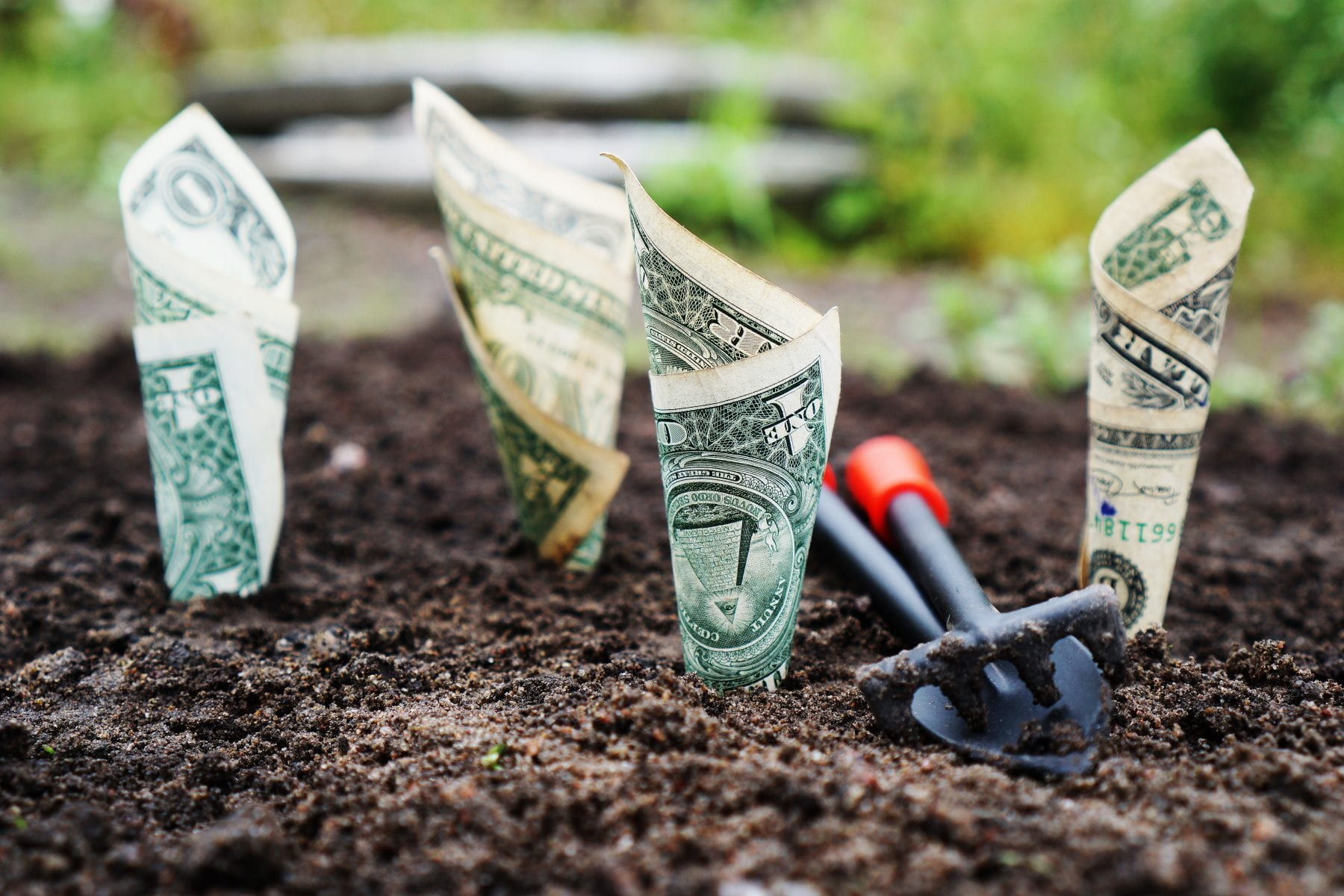 Photo: dollar bills growing out of the ground with lawn tools